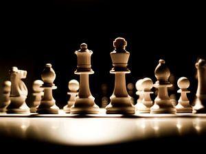 schaak in het spotlicht