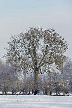 Landelijke bomen- en heggenrij in de winter, Nederrijn, Noordrijn-Westfalen, Duitsland. van wunderbare Erde