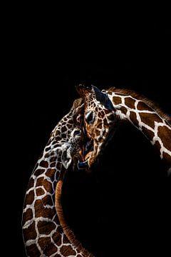 Giraffe van Evi Willemsen