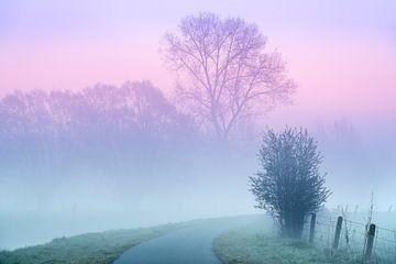 Am Dender in Idegem an einem nebligen Morgen