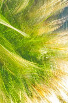 Hohes Gras von Jan Peter Jansen
