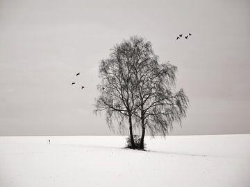2 Birches von Lena Weisbek