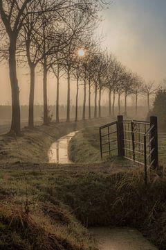 Bomenlaan von Moetwil en van Dijk - Fotografie