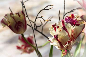 Franse Tulpen in vaas van Annelies Huijzer