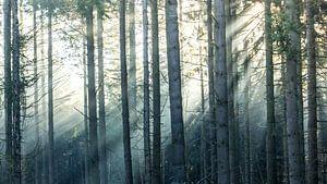 Zonnestralen in een boslandschap