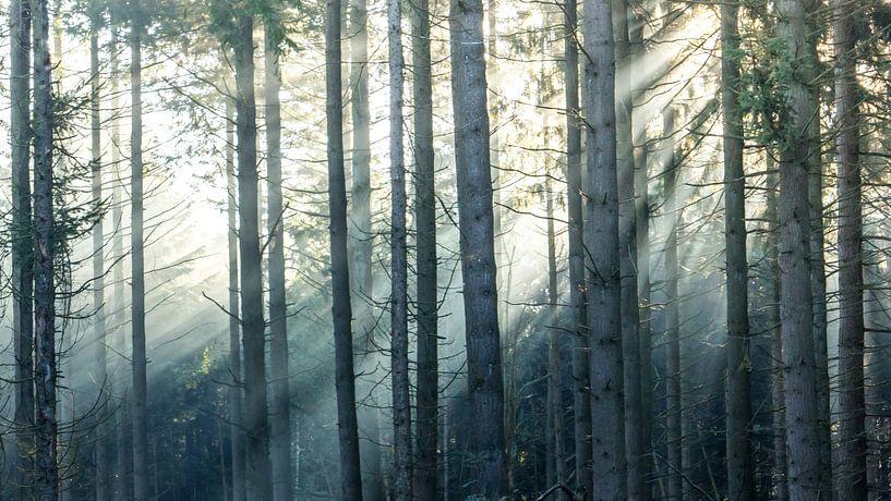 Zonnestralen in een boslandschap van Martzen Fotografie