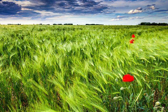 Windy Fields van Harold van den Berge