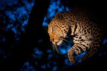 LP 71301259 Een luipaard van BeeldigBeeld Food & Lifestyle