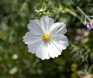 Witte bloem met bezoeker van Lynlabiephotography