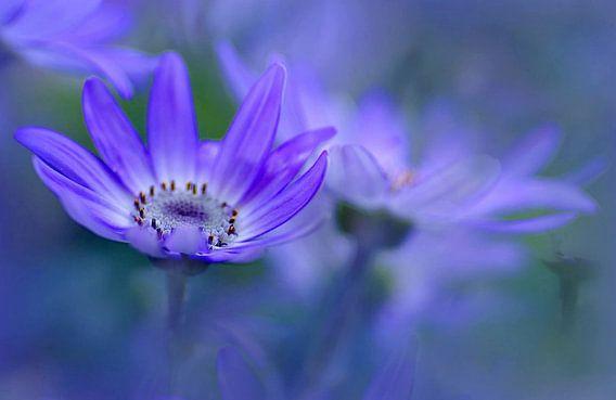 Wegdromen in een blauwe wereld van Marlies Prieckaerts