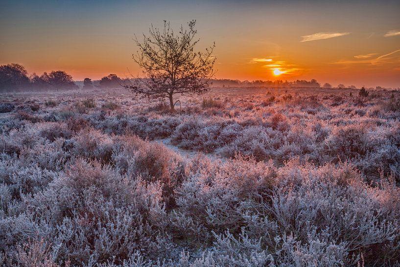 Posbank heide landschap in de winter van Elroy Spelbos