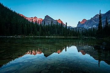 glatte Spiegelung im See mit Alpenglühen am  Lake O'Hara im Yoho National Park, British Columbia, Ca von Leo Schindzielorz
