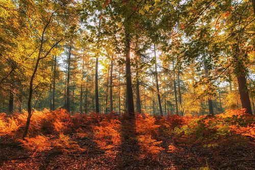 Herfstkleuren in het Speulderbos II