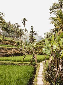 Tegalalang Rijstterras / rijstvelden Ubud Bali van Photo Atelier