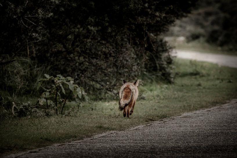 Along the road van Ruud Peters