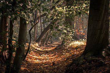 Herfst bos van Gertjan Hesselink