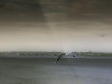 Lonely flight von Nildo Scoop