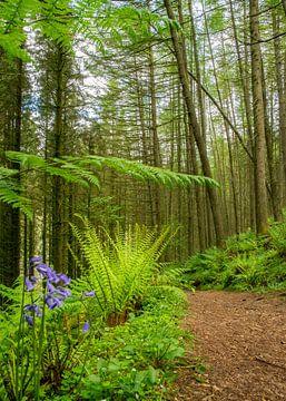Glenashdale Holz, Insel Arran von Arina Keijzer