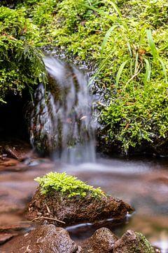 Kleine waterval in bos met stenen van Guenter Purin