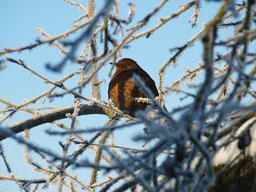 Vogel in de winter van Annie Lausberg-Pater