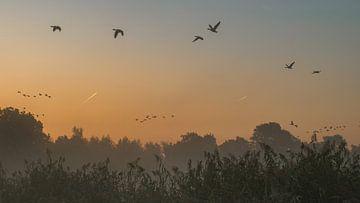 Vogelvlucht van Karen de Geus
