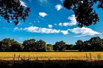 dry field van Werner V.M.