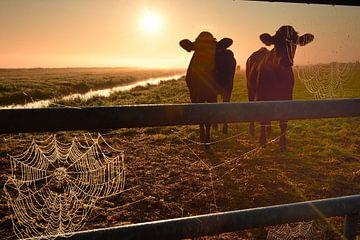 Koeien op een mistige ochtend von John Leeninga