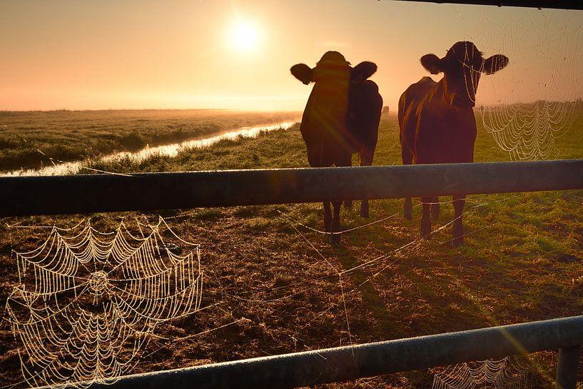 Koeien op een mistige ochtend van John Leeninga