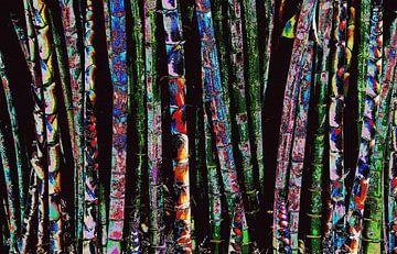 Bunter Bambus von Gert-Jan Siesling