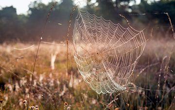 Spin in een bedauwd groot web van dichtbij van Ruud Morijn
