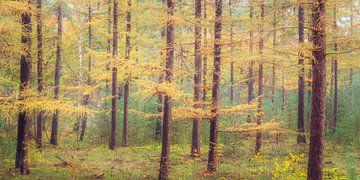 Lariksen in herfstkleuren van Sjaak den Breeje Landschapsfotografie