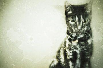 Cat van Karin Stuurman