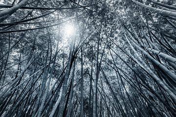 bamboe jungle in zwart wit van Ruurd Dankloff