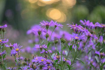 Blumen Teil 26 von Tania Perneel