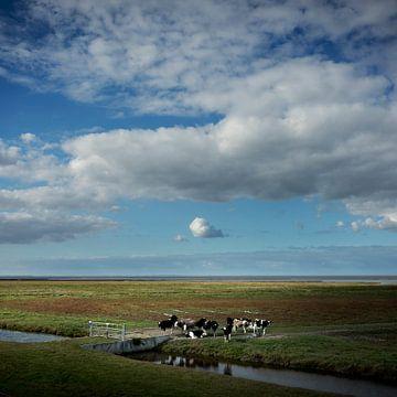 Koeien in de kwelders (vierkante versie) van Bo Scheeringa Photography