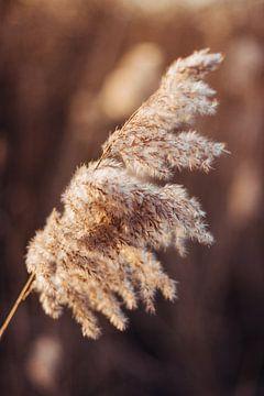 Grote pluim in de lente van Holly Klein Oonk