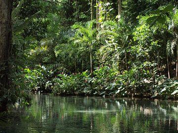 Jamaica natuur von Annie Lausberg-Pater
