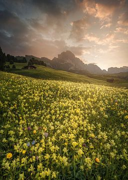 Prairie ensoleillée des Dolomites sur Peter Poppe