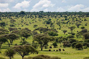 Elefanten laufen durch die Savanne in Tansania von OCEANVOLTA