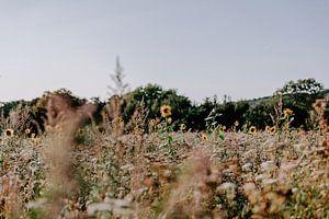 Zweeds landschap met zonnebloemen van Jessie Jansen