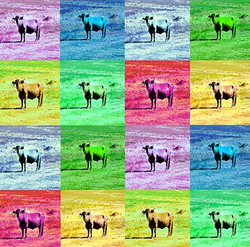 Kleurrijke vierkanten met stieren.