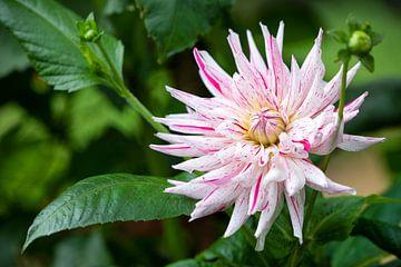 Exotische Blume von Colin Eusman