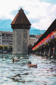 Enten an der Kapellbrücke in Luzern von Isa V