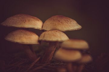 Herfst, Paddestoelen in het bos -1 van Marianne Twijnstra-Gerrits