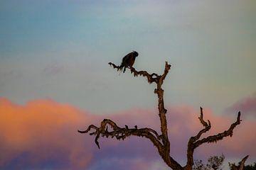 Pauw in boom Sri Lanka van Julie Brunsting
