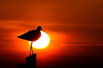 Grutto silhouet bij ondergaande zon. van Kevin van den Hoven