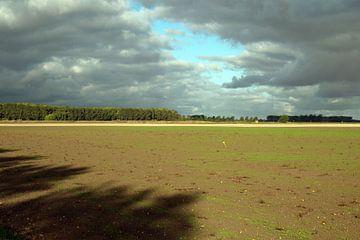 Schaduw in de ontstuimige polder van Anne Hana