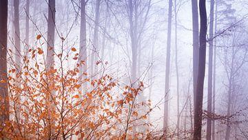 Laat herfstbladeren van Tobias Luxberg