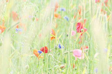 Wildblumenwiese von Karin de Boer Photography