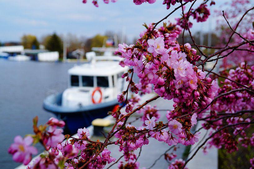 Kirschblüte von Bowspirit Maregraphy